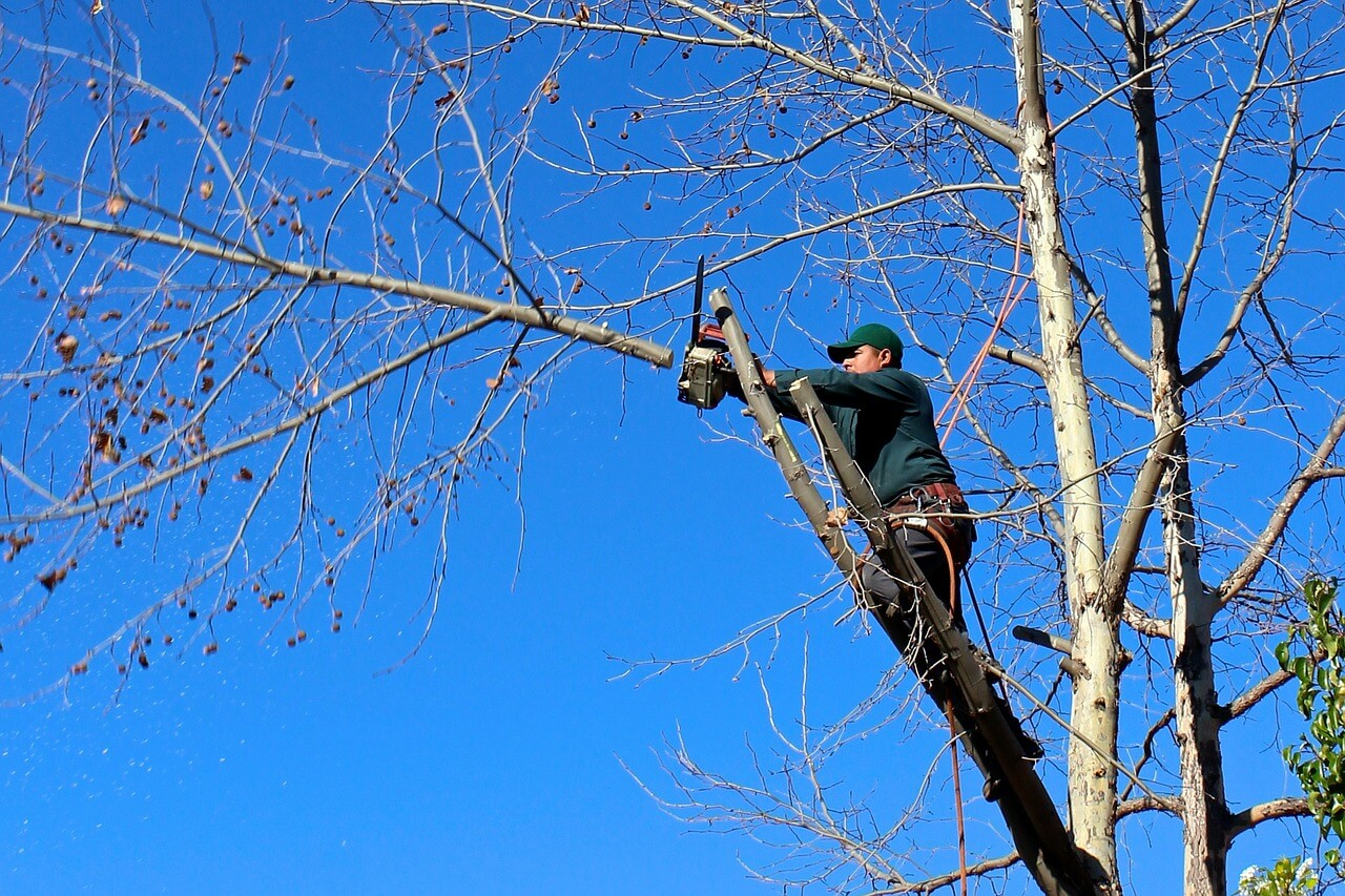 Contact Us-Imperial Beach CA Tree Trimming and Stump Grinding Services-We Offer Tree Trimming Services, Tree Removal, Tree Pruning, Tree Cutting, Residential and Commercial Tree Trimming Services, Storm Damage, Emergency Tree Removal, Land Clearing, Tree Companies, Tree Care Service, Stump Grinding, and we're the Best Tree Trimming Company Near You Guaranteed!