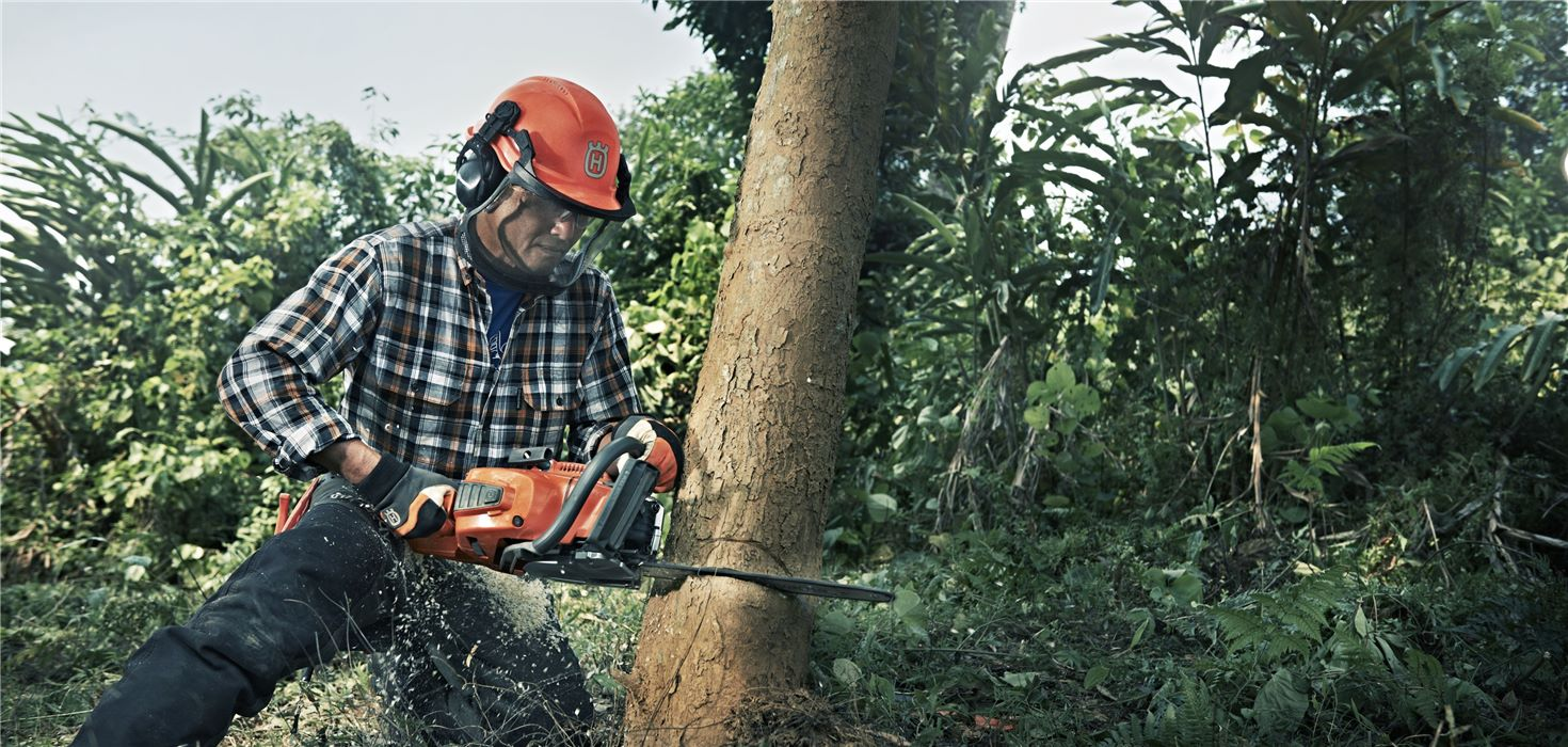 Imperial Beach CA Tree Trimming and Stump Grinding Services Home Page Image-We Offer Tree Trimming Services, Tree Removal, Tree Pruning, Tree Cutting, Residential and Commercial Tree Trimming Services, Storm Damage, Emergency Tree Removal, Land Clearing, Tree Companies, Tree Care Service, Stump Grinding, and we're the Best Tree Trimming Company Near You Guaranteed!