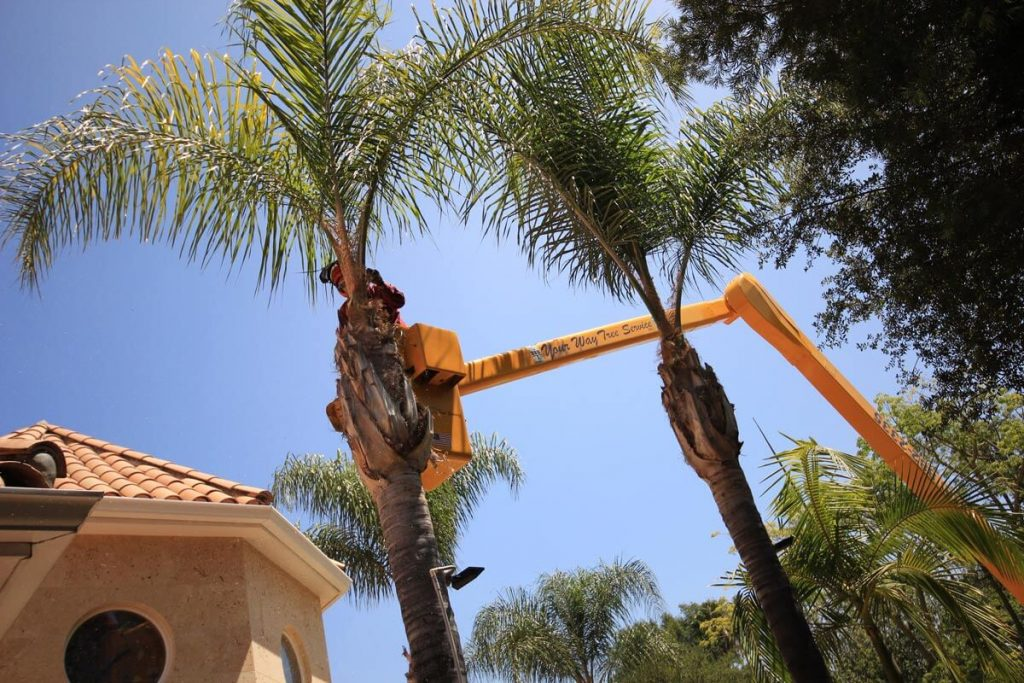 Palm Tree Trimming-Imperial Beach CA Tree Trimming and Stump Grinding Services-We Offer Tree Trimming Services, Tree Removal, Tree Pruning, Tree Cutting, Residential and Commercial Tree Trimming Services, Storm Damage, Emergency Tree Removal, Land Clearing, Tree Companies, Tree Care Service, Stump Grinding, and we're the Best Tree Trimming Company Near You Guaranteed!
