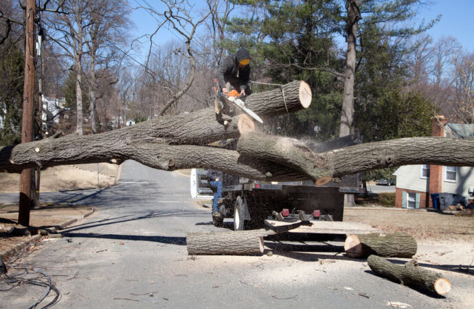 Residential Tree Services-Imperial Beach CA Tree Trimming and Stump Grinding Services-We Offer Tree Trimming Services, Tree Removal, Tree Pruning, Tree Cutting, Residential and Commercial Tree Trimming Services, Storm Damage, Emergency Tree Removal, Land Clearing, Tree Companies, Tree Care Service, Stump Grinding, and we're the Best Tree Trimming Company Near You Guaranteed!