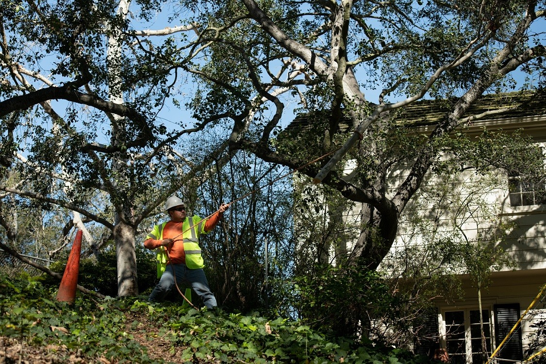San Diego Bay-Imperial Beach CA Tree Trimming and Stump Grinding Services-We Offer Tree Trimming Services, Tree Removal, Tree Pruning, Tree Cutting, Residential and Commercial Tree Trimming Services, Storm Damage, Emergency Tree Removal, Land Clearing, Tree Companies, Tree Care Service, Stump Grinding, and we're the Best Tree Trimming Company Near You Guaranteed!