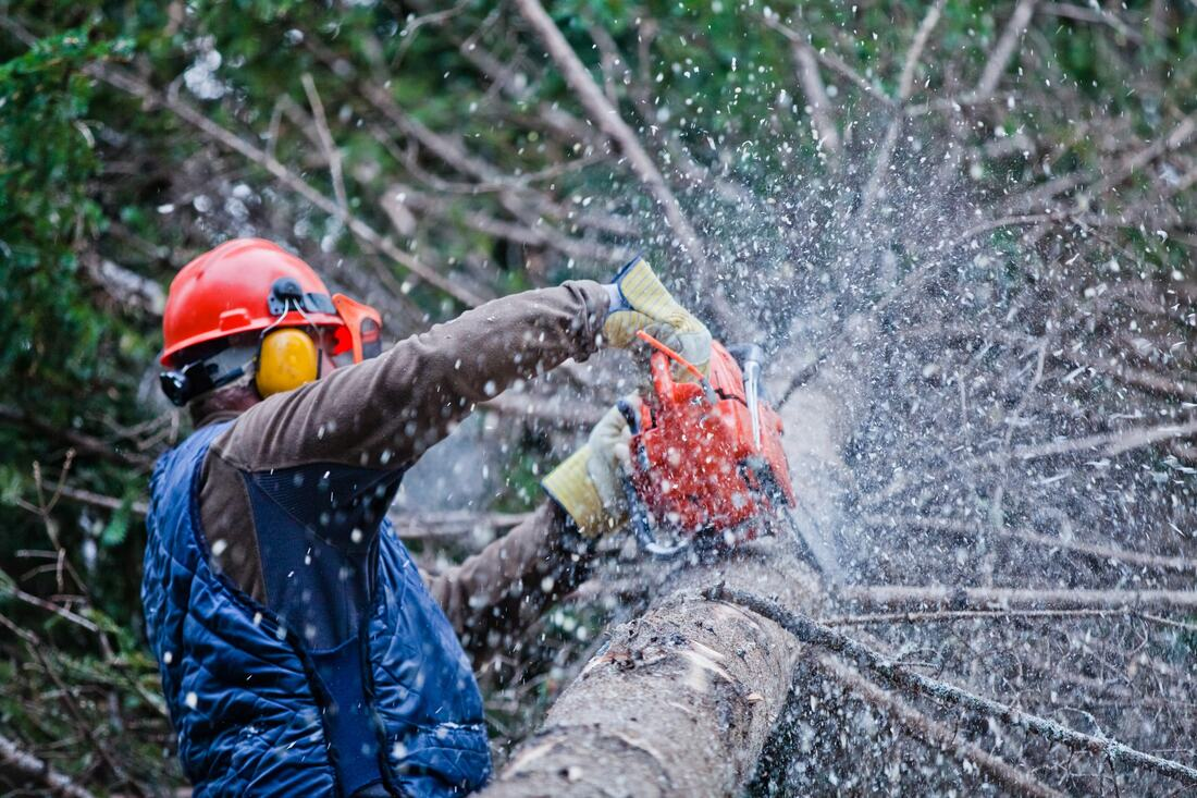 San Ysidro-Imperial Beach CA Tree Trimming and Stump Grinding Services-We Offer Tree Trimming Services, Tree Removal, Tree Pruning, Tree Cutting, Residential and Commercial Tree Trimming Services, Storm Damage, Emergency Tree Removal, Land Clearing, Tree Companies, Tree Care Service, Stump Grinding, and we're the Best Tree Trimming Company Near You Guaranteed!