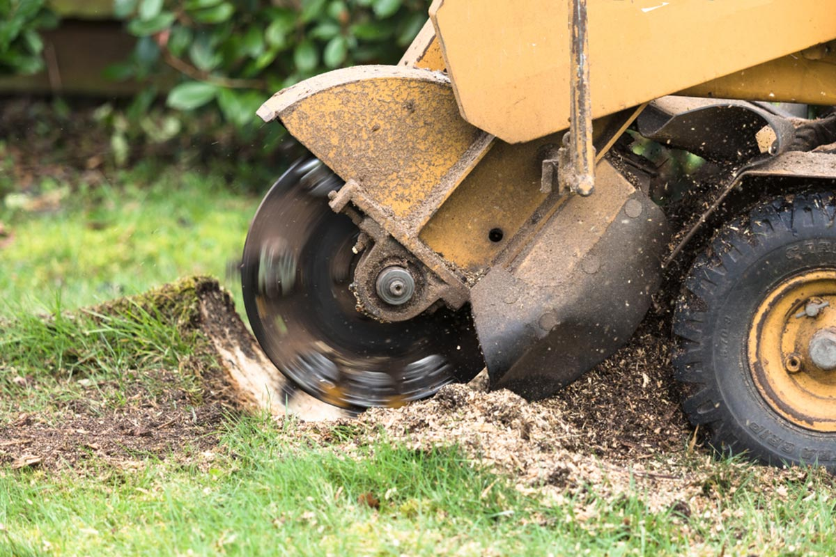 Stump Grinding-Imperial Beach CA Tree Trimming and Stump Grinding Services-We Offer Tree Trimming Services, Tree Removal, Tree Pruning, Tree Cutting, Residential and Commercial Tree Trimming Services, Storm Damage, Emergency Tree Removal, Land Clearing, Tree Companies, Tree Care Service, Stump Grinding, and we're the Best Tree Trimming Company Near You Guaranteed!