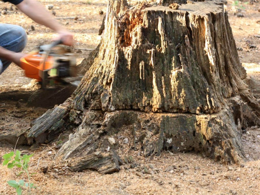 Stump Removal-Imperial Beach CA Tree Trimming and Stump Grinding Services-We Offer Tree Trimming Services, Tree Removal, Tree Pruning, Tree Cutting, Residential and Commercial Tree Trimming Services, Storm Damage, Emergency Tree Removal, Land Clearing, Tree Companies, Tree Care Service, Stump Grinding, and we're the Best Tree Trimming Company Near You Guaranteed!