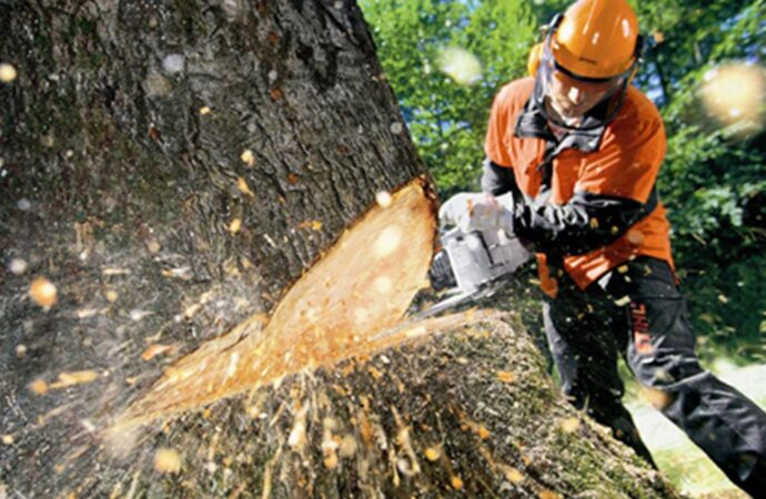 Tree Cutting-Imperial Beach CA Tree Trimming and Stump Grinding Services-We Offer Tree Trimming Services, Tree Removal, Tree Pruning, Tree Cutting, Residential and Commercial Tree Trimming Services, Storm Damage, Emergency Tree Removal, Land Clearing, Tree Companies, Tree Care Service, Stump Grinding, and we're the Best Tree Trimming Company Near You Guaranteed!