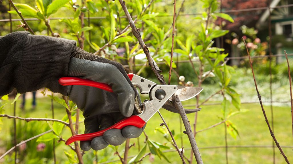 Tree Pruning-Imperial Beach CA Tree Trimming and Stump Grinding Services-We Offer Tree Trimming Services, Tree Removal, Tree Pruning, Tree Cutting, Residential and Commercial Tree Trimming Services, Storm Damage, Emergency Tree Removal, Land Clearing, Tree Companies, Tree Care Service, Stump Grinding, and we're the Best Tree Trimming Company Near You Guaranteed!
