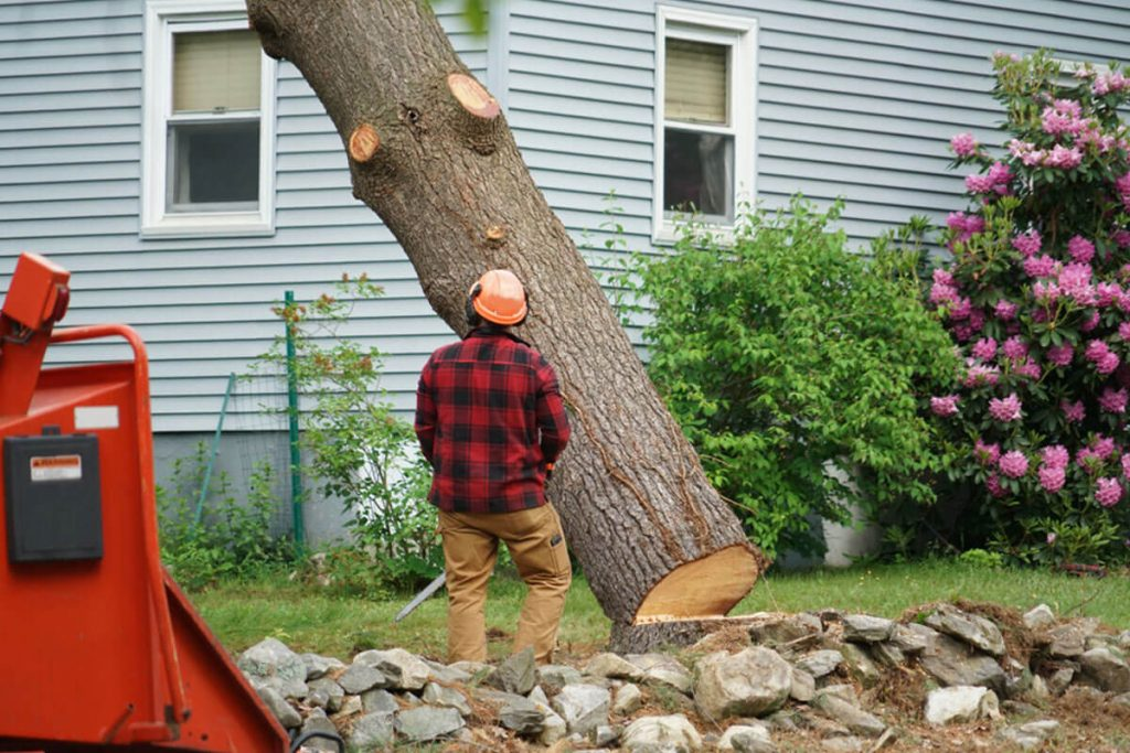 Tree Removal-Imperial Beach CA Tree Trimming and Stump Grinding Services-We Offer Tree Trimming Services, Tree Removal, Tree Pruning, Tree Cutting, Residential and Commercial Tree Trimming Services, Storm Damage, Emergency Tree Removal, Land Clearing, Tree Companies, Tree Care Service, Stump Grinding, and we're the Best Tree Trimming Company Near You Guaranteed!